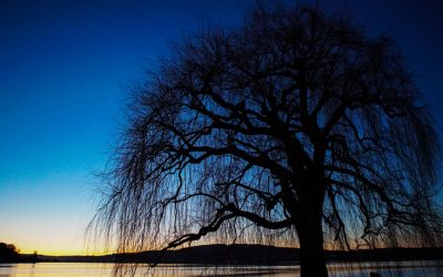 Berlingen-Baum_web