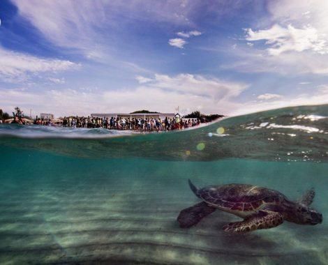 Rocco-Schildkröte-puliAMOlapuglia